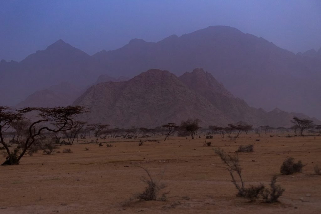The Gebel Elba National Park showing acacia trees and the mountains - ©Sherif Lofty 2020.